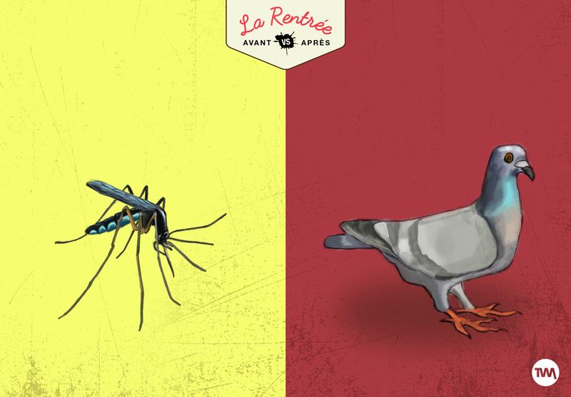 the-wild-mix-03-moustik-vs-pigeon